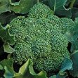 nutriblast smoothie with Broccoli