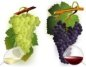 Grapes for nutrition and wellness
